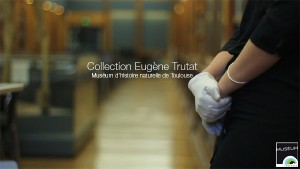 Collection Eugène Trutat